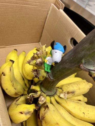 Banana regime!