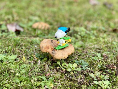 Mushroom invasion...