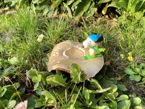 Mushroom invasion!