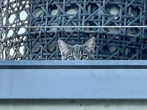 Under surveillance…